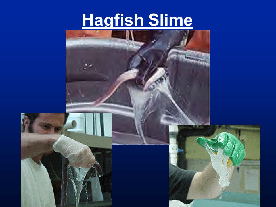 Hagfish Slime