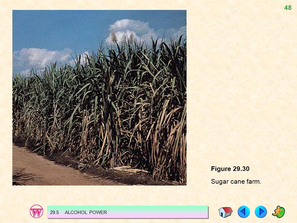 48 Figure 29.30 Sugar cane farm. 29.5 ALCOHOL POWER