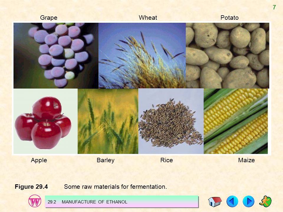 7 Figure 29.4 Some raw materials for fermentation. 29.2 MANUFACTURE OF ETHANOL Grape Wheat Potato Apple Barley Rice Maize
