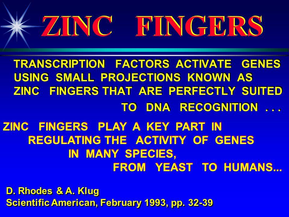 ZINC METALLOENZYMES INFORMATION HANDLING ENZYMES ZINC METALLOENZYMES INFORMATION HANDLING ENZYMES DNA POLYMERASE RNA POLYMERASE REVERSE TRANSCRIPTASE TdT THYMIDINE KINASE DNA POLYMERASE RNA POLYMERASE REVERSE TRANSCRIPTASE TdT THYMIDINE KINASE