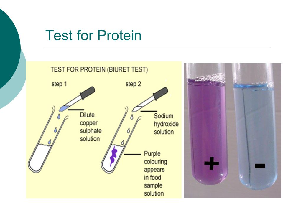 Test for Protein