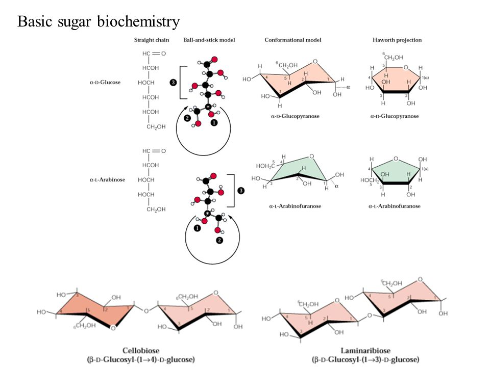 Basic sugar biochemistry