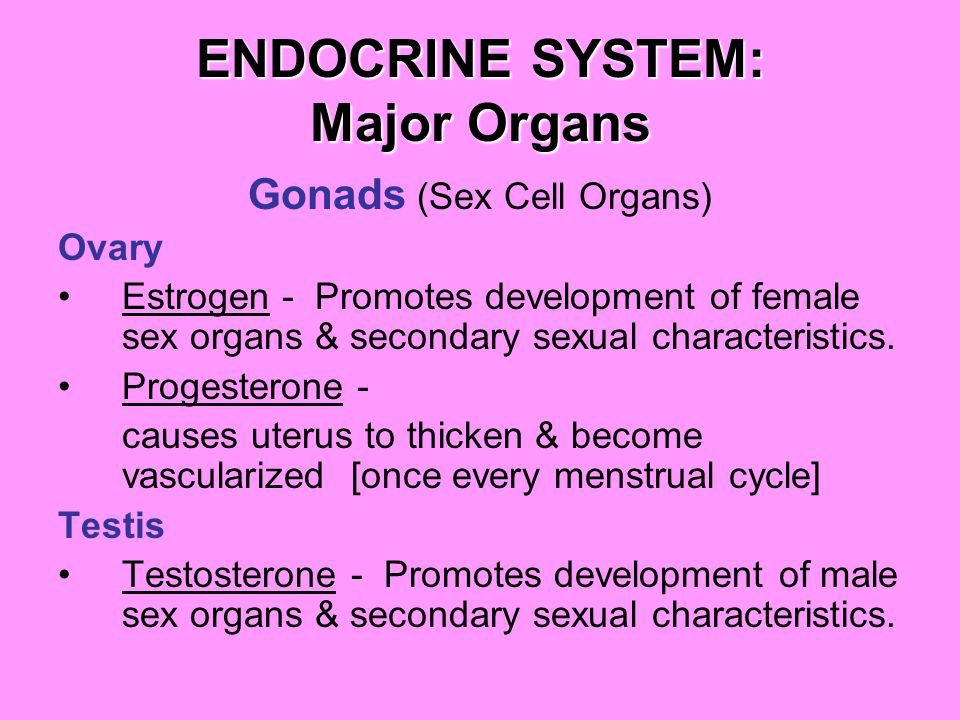 ENDOCRINE SYSTEM: Major Organs Gonads (Sex Cell Organs) Ovary Estrogen - Promotes development of female sex organs & secondary sexual characteristics.