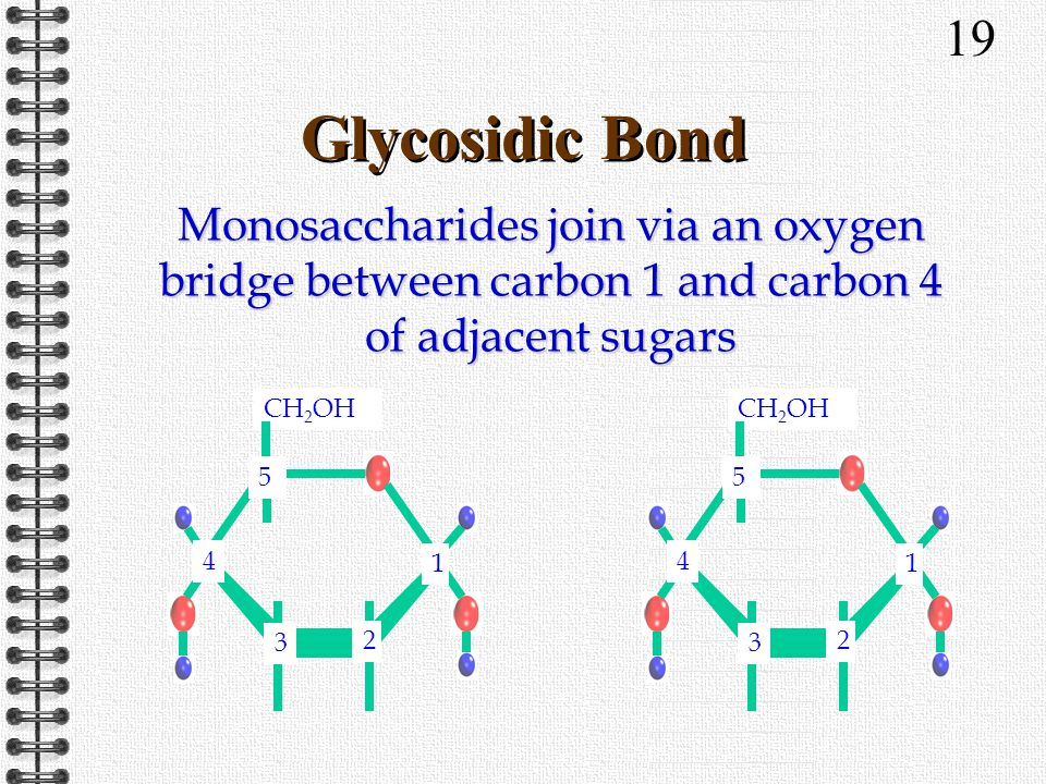 19 Glycosidic Bond CH 2 OH 3 2 4 1 5 3 2 4 1 5 Monosaccharides join via an oxygen bridge between carbon 1 and carbon 4 of adjacent sugars