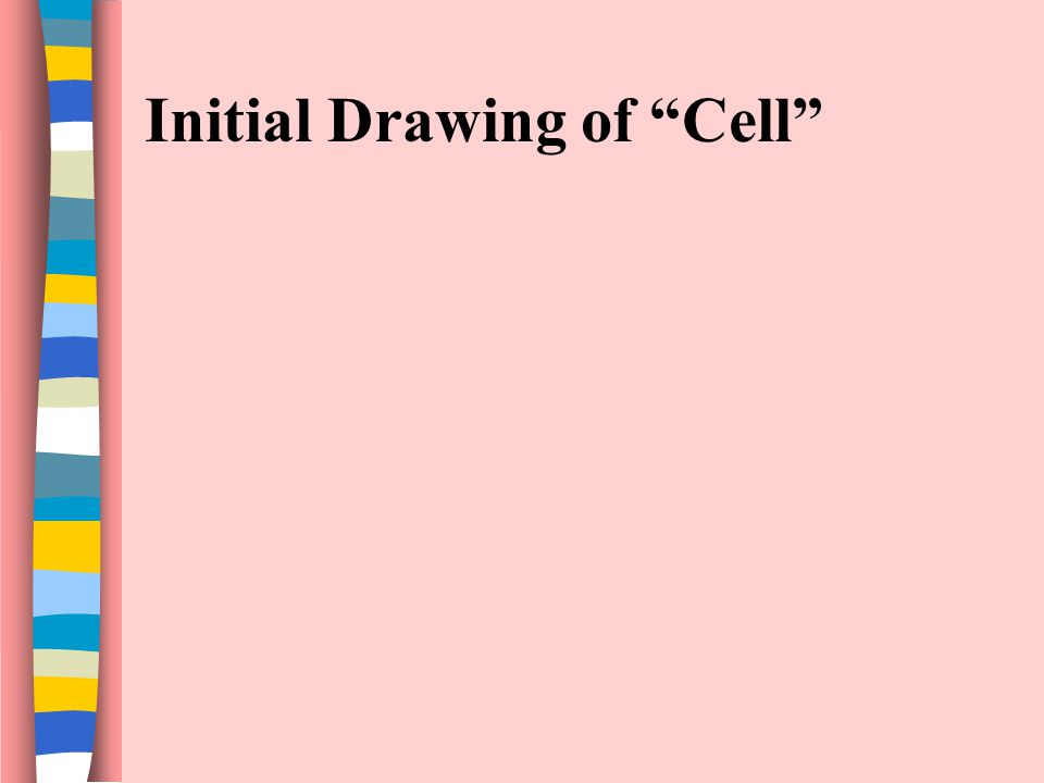 Initial Drawing of Cell