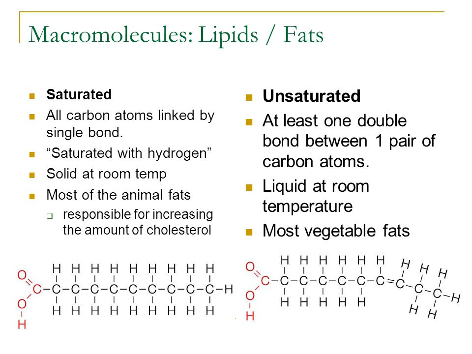 Macromolecules: Lipids / Fats Saturated All carbon atoms linked by single bond.
