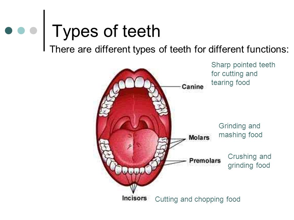 Types of teeth There are different types of teeth for different functions: Cutting and chopping food Sharp pointed teeth for cutting and tearing food