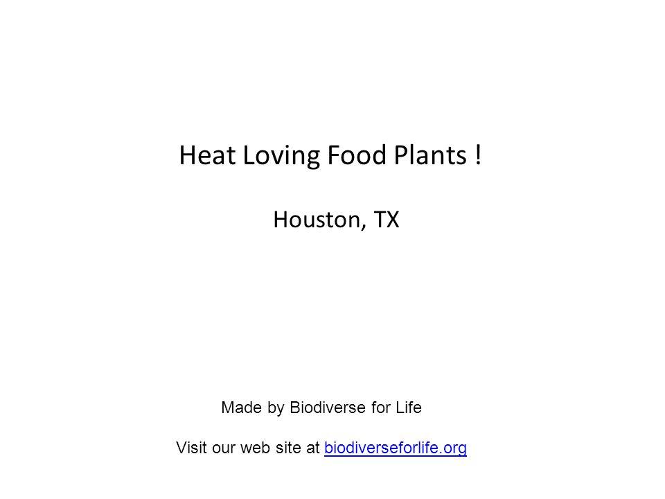 Heat Loving Food Plants .