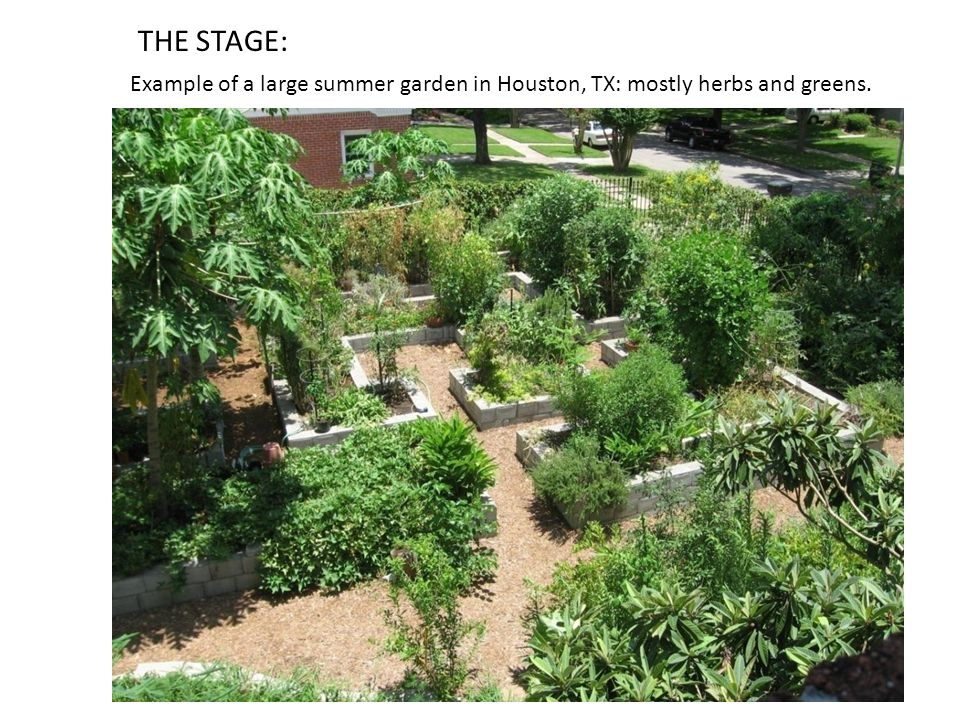 Example of a large summer garden in Houston, TX: mostly herbs and greens. THE STAGE: