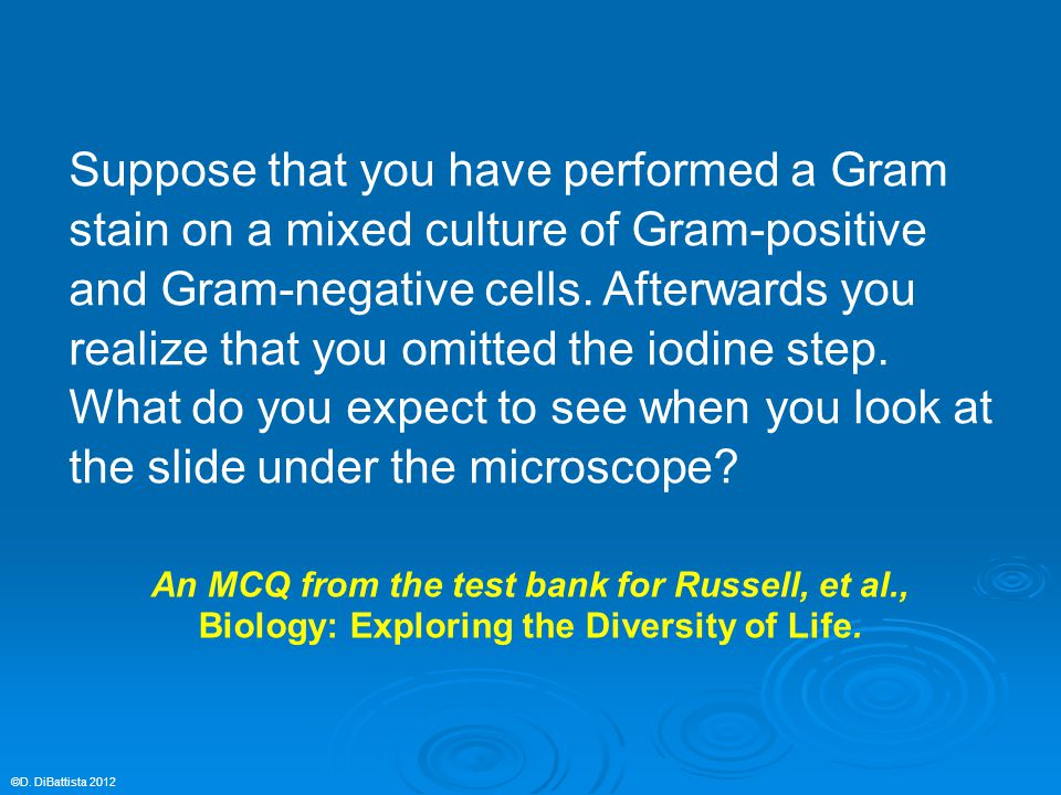 Suppose that you have performed a Gram stain on a mixed culture of Gram-positive and Gram-negative cells.