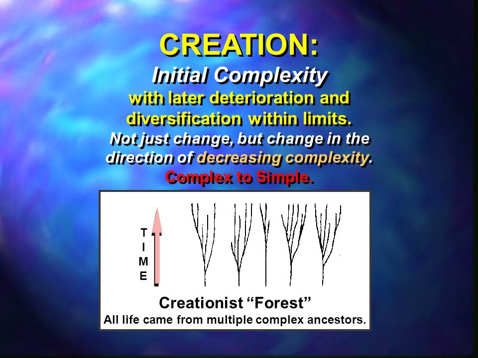 TIMETIME Creationist Forest All life came from multiple complex ancestors.