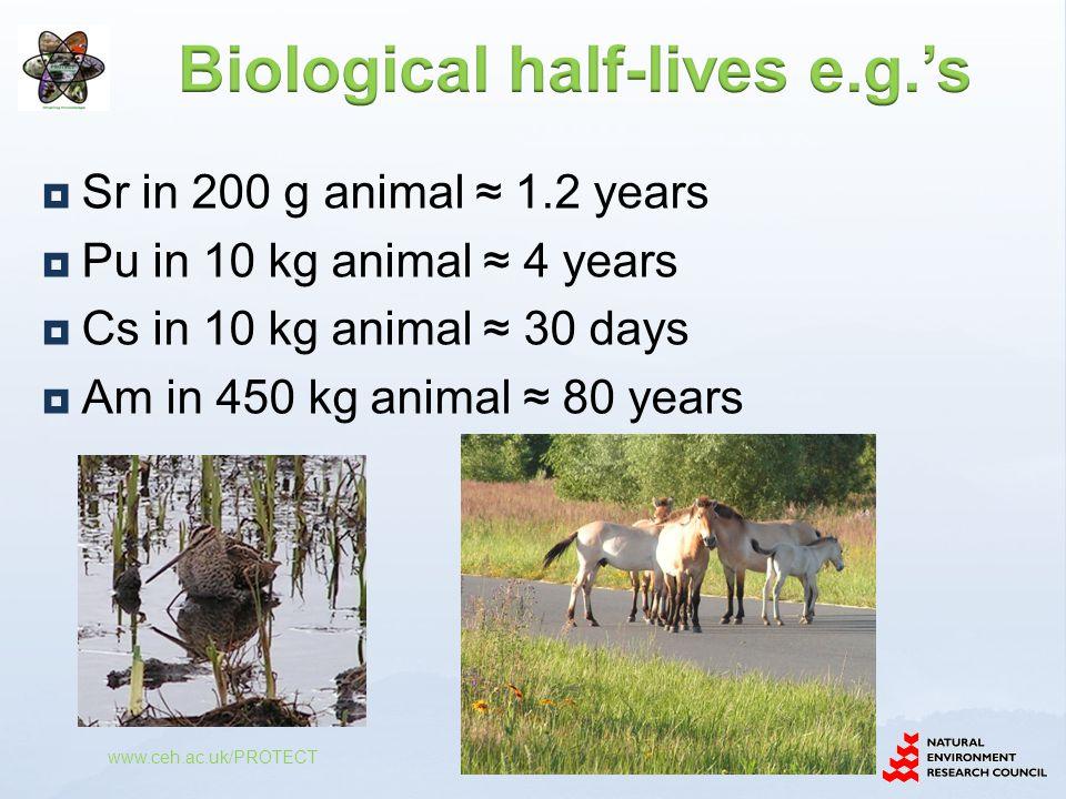  Sr in 200 g animal ≈ 1.2 years  Pu in 10 kg animal ≈ 4 years  Cs in 10 kg animal ≈ 30 days  Am in 450 kg animal ≈ 80 years www.ceh.ac.uk/PROTECT