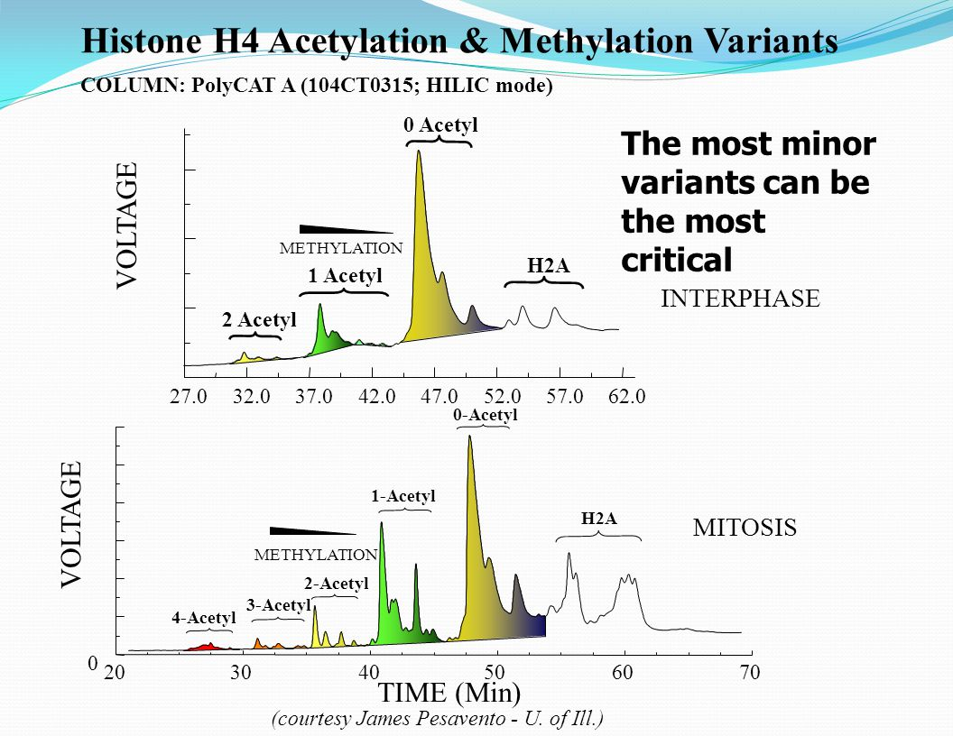 Histone H4 Acetylation & Methylation Variants COLUMN: PolyCAT A (104CT0315; HILIC mode) 27.032.037.042.047.052.057.062.0 VOLTAGE 0 Acetyl 1 Acetyl 2 Acetyl H2A METHYLATION TIME (Min) 203040506070 VOLTAGE 0 4-Acetyl 3-Acetyl 2-Acetyl 1-Acetyl 0-Acetyl H2A METHYLATION (courtesy James Pesavento - U.
