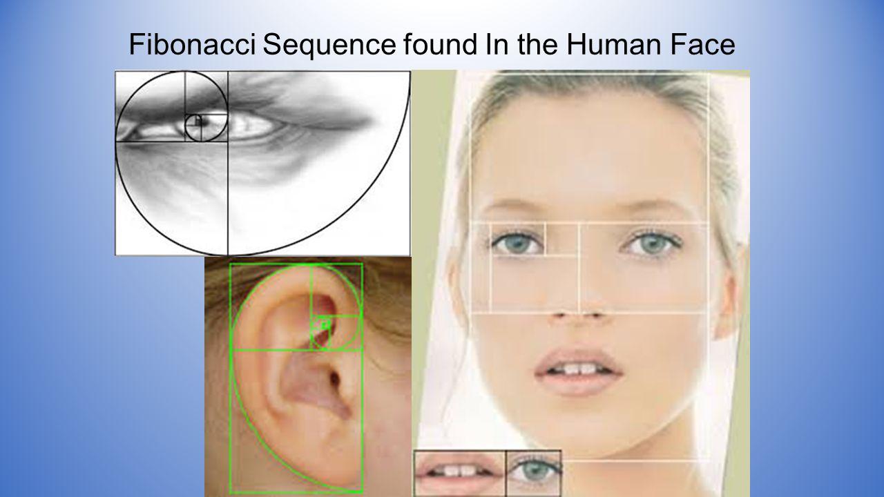 Fibonacci Sequence found In the Human Face