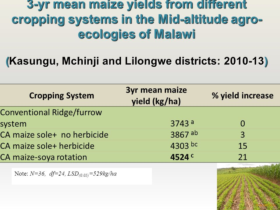 3-yr mean maize yields from different cropping systems in the Mid-altitude agro- ecologies of Malawi (Kasungu, Mchinji and Lilongwe districts: 2010-13) Cropping System 3yr mean maize yield (kg/ha) % yield increase Conventional Ridge/furrow system3743 a 0 CA maize sole+ no herbicide3867 ab 3 CA maize sole+ herbicide4303 bc 15 CA maize-soya rotation4524 c 21 Note: N=36, df=24, LSD (0.05) =529kg/ha