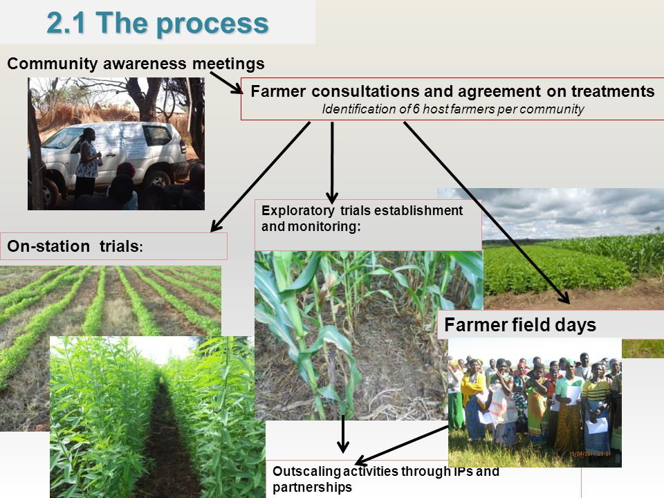 2.1 The process Community awareness meetings Farmer consultations and agreement on treatments Identification of 6 host farmers per community On-station trials : Exploratory trials establishment and monitoring: Outscaling activities through IPs and partnerships Farmer field days