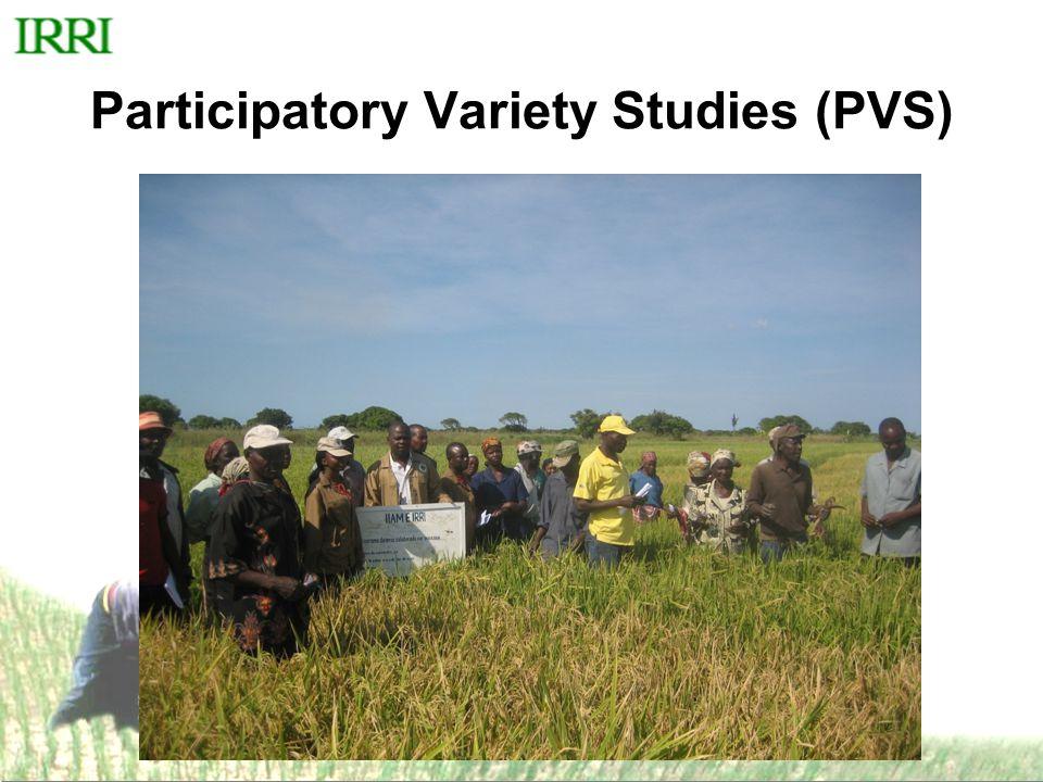 Participatory Variety Studies (PVS)