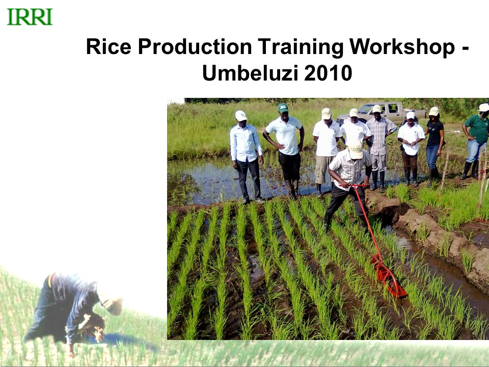 Rice Production Training Workshop - Umbeluzi 2010