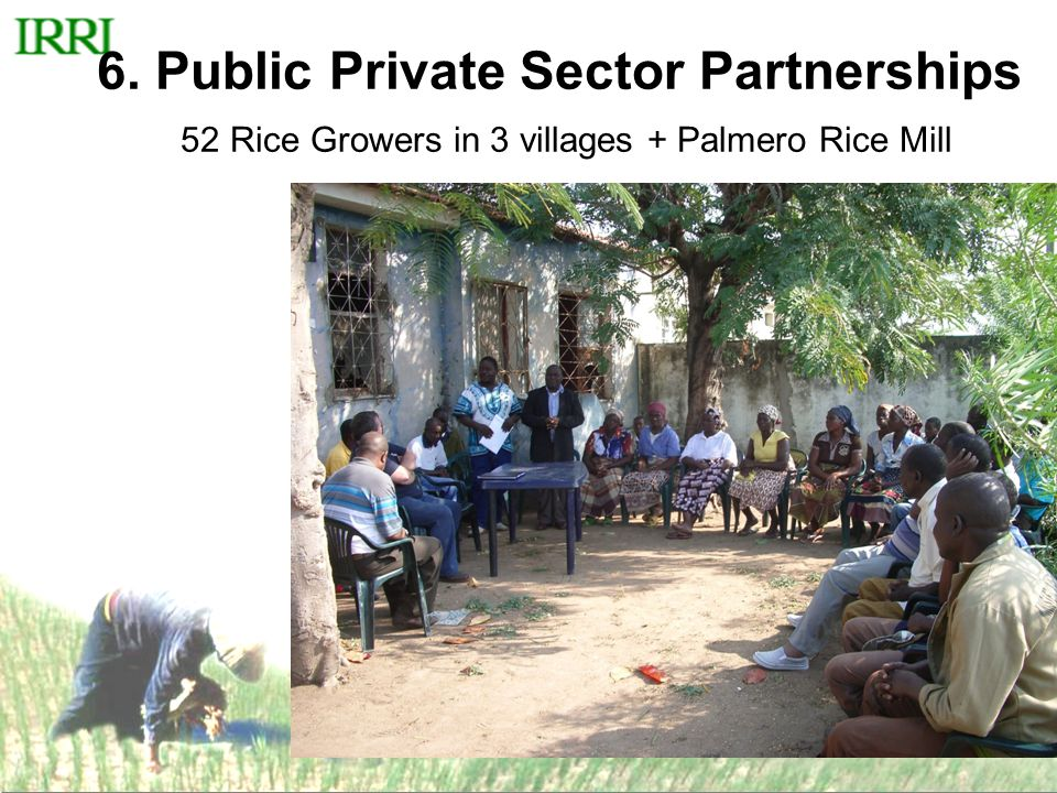 6. Public Private Sector Partnerships 52 Rice Growers in 3 villages + Palmero Rice Mill
