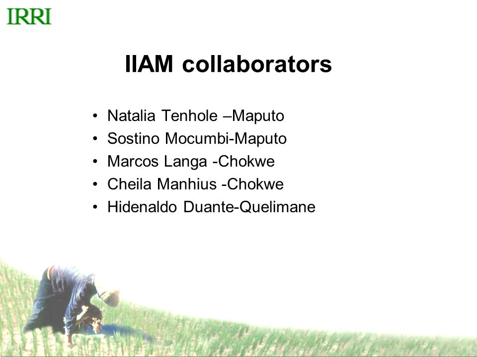 IRRI Activities in Mozambique 1.Socio economics program 2.Breeding program 3.Crop production and post harvest (water, weed, nutrient management, equipment testing and demonstration) 4.Capacity building 5.Information management (RKB, Rice and Extension management manuals) 6.Private sector and village based programs