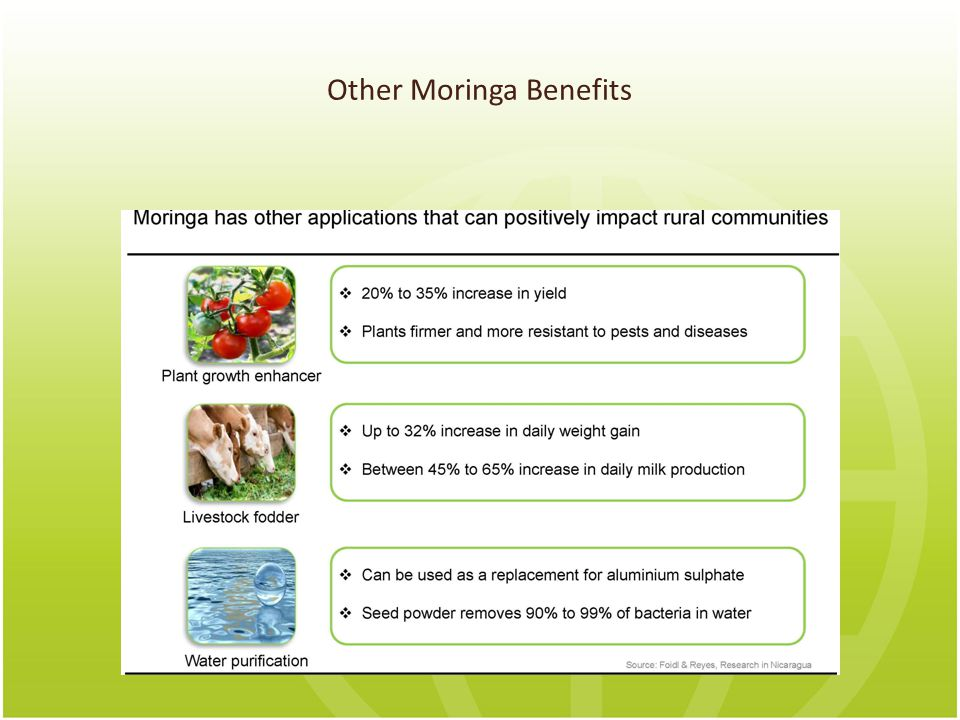 Other Moringa Benefits