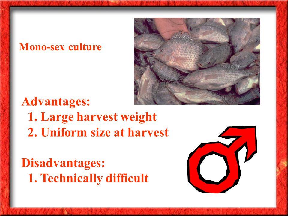 Advantages: 1. Large harvest weight 2. Uniform size at harvest Disadvantages: 1.