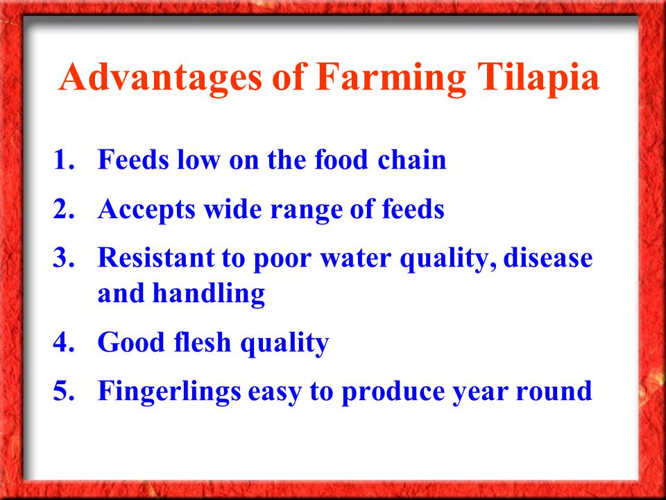 Advantages of Farming Tilapia 1.Feeds low on the food chain 2.Accepts wide range of feeds 3.Resistant to poor water quality, disease and handling 4.Go