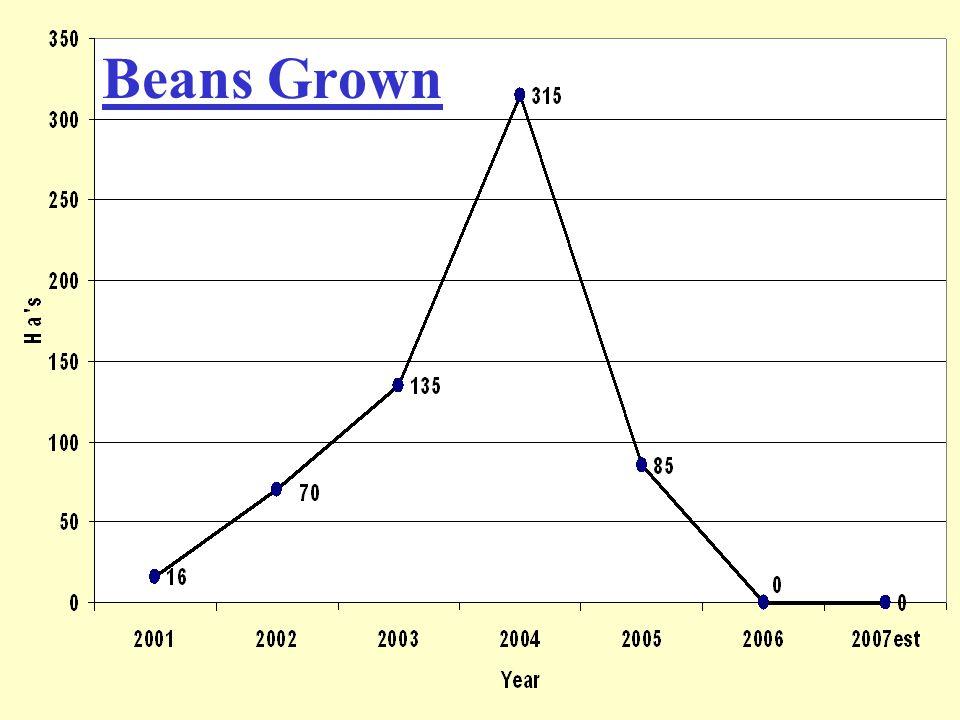 Beans Grown