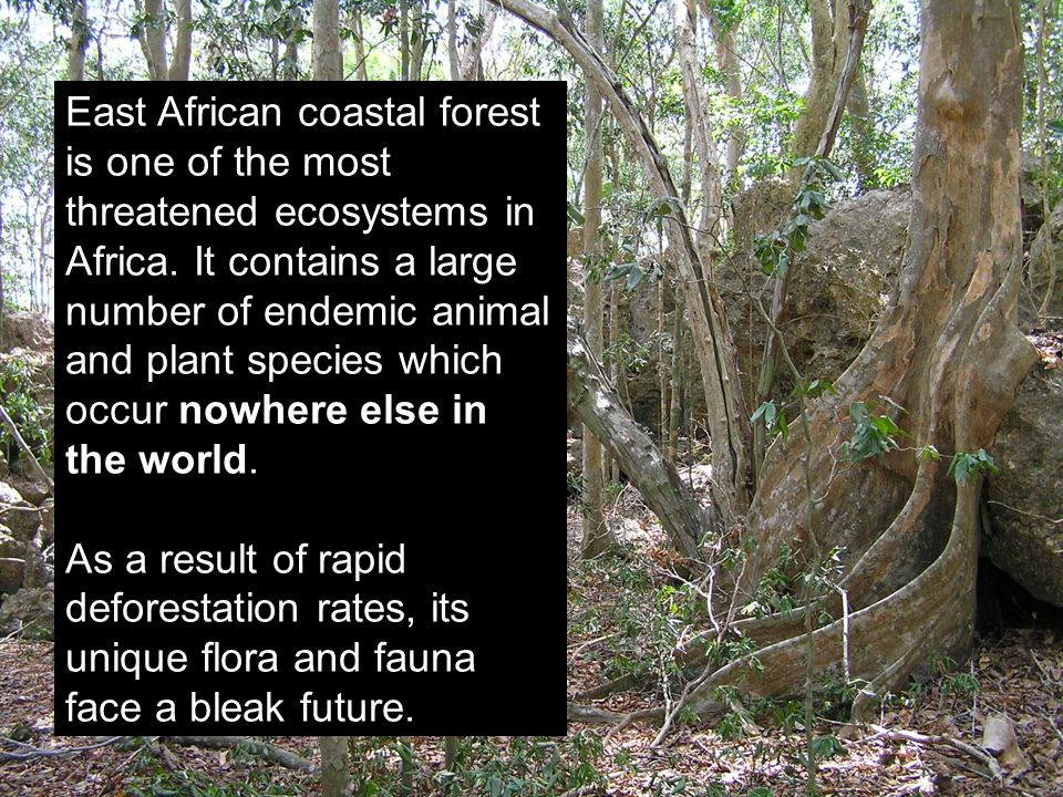 East African coastal forest is one of the most threatened ecosystems in Africa. It contains a large number of endemic animal and plant species which o