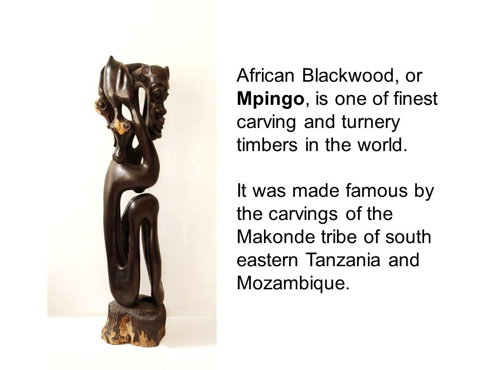 African Blackwood, or Mpingo, is one of finest carving and turnery timbers in the world. It was made famous by the carvings of the Makonde tribe of so