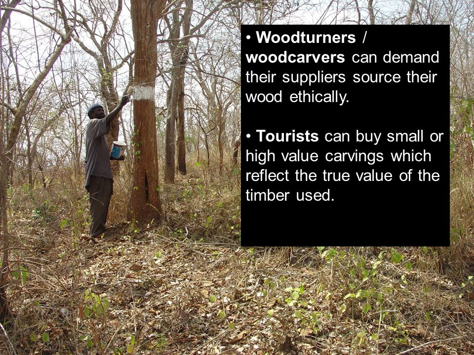 . Woodturners / woodcarvers can demand their suppliers source their wood ethically. Tourists can buy small or high value carvings which reflect the tr