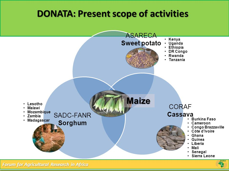 Forum for Agricultural Research in Africa DONATA: Present scope of activities Maize SADC-FANR Sorghum CORAF Cassava ASARECA Sweet potato Kenya Uganda