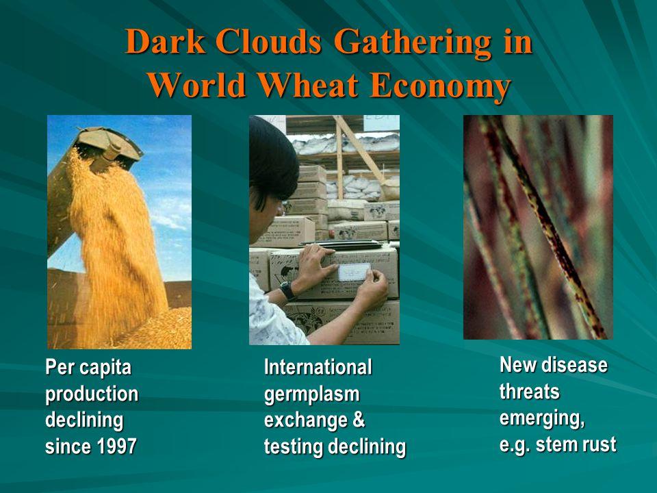 Dark Clouds Gathering in World Wheat Economy Per capita productiondeclining since 1997 Internationalgermplasm exchange & testing declining New disease threatsemerging, e.g.