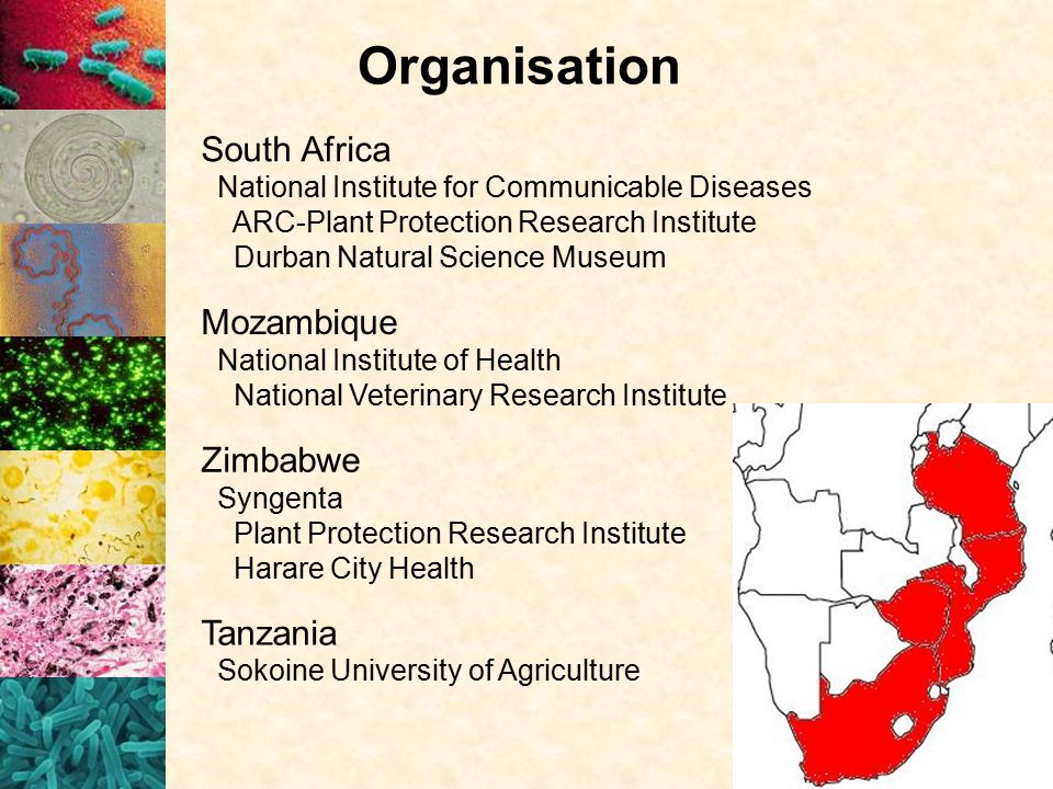 Organisation Tanzania Sokoine University of Agriculture Mozambique National Institute of Health National Veterinary Research Institute Zimbabwe Syngenta Plant Protection Research Institute Harare City Health South Africa National Institute for Communicable Diseases ARC-Plant Protection Research Institute Durban Natural Science Museum