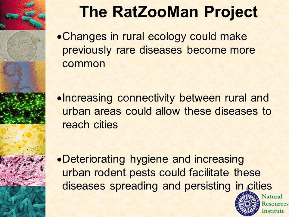  Changes in rural ecology could make previously rare diseases become more common  Increasing connectivity between rural and urban areas could allow these diseases to reach cities  Deteriorating hygiene and increasing urban rodent pests could facilitate these diseases spreading and persisting in cities The RatZooMan Project
