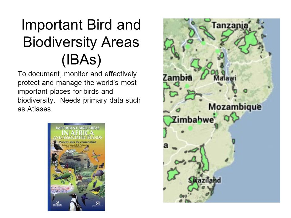 Important Bird and Biodiversity Areas (IBAs) To document, monitor and effectively protect and manage the world's most important places for birds and b