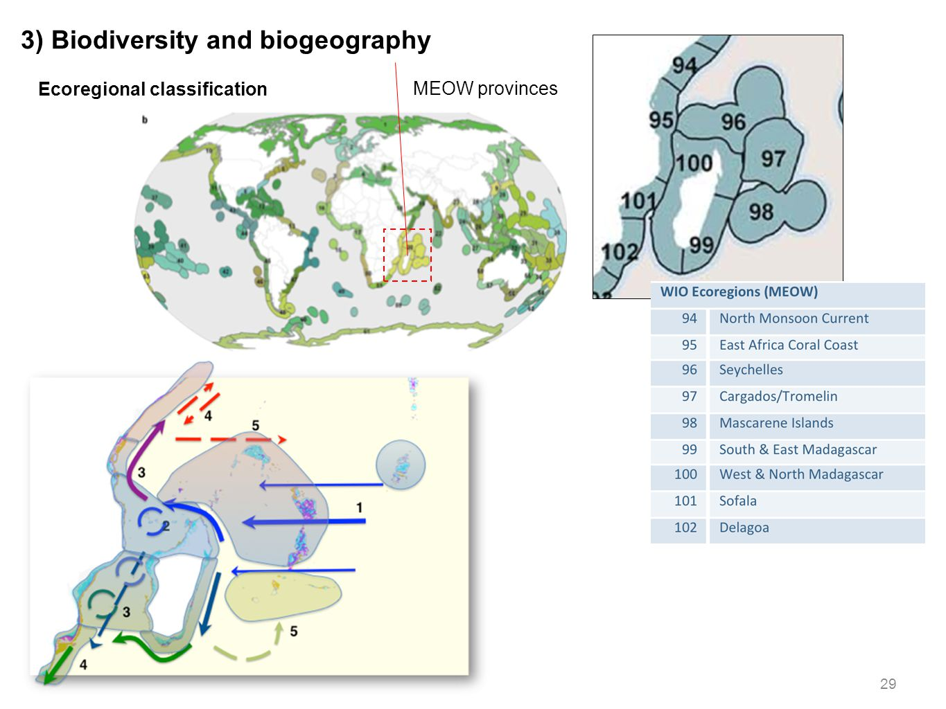 29 3) Biodiversity and biogeography Ecoregional classification MEOW provinces
