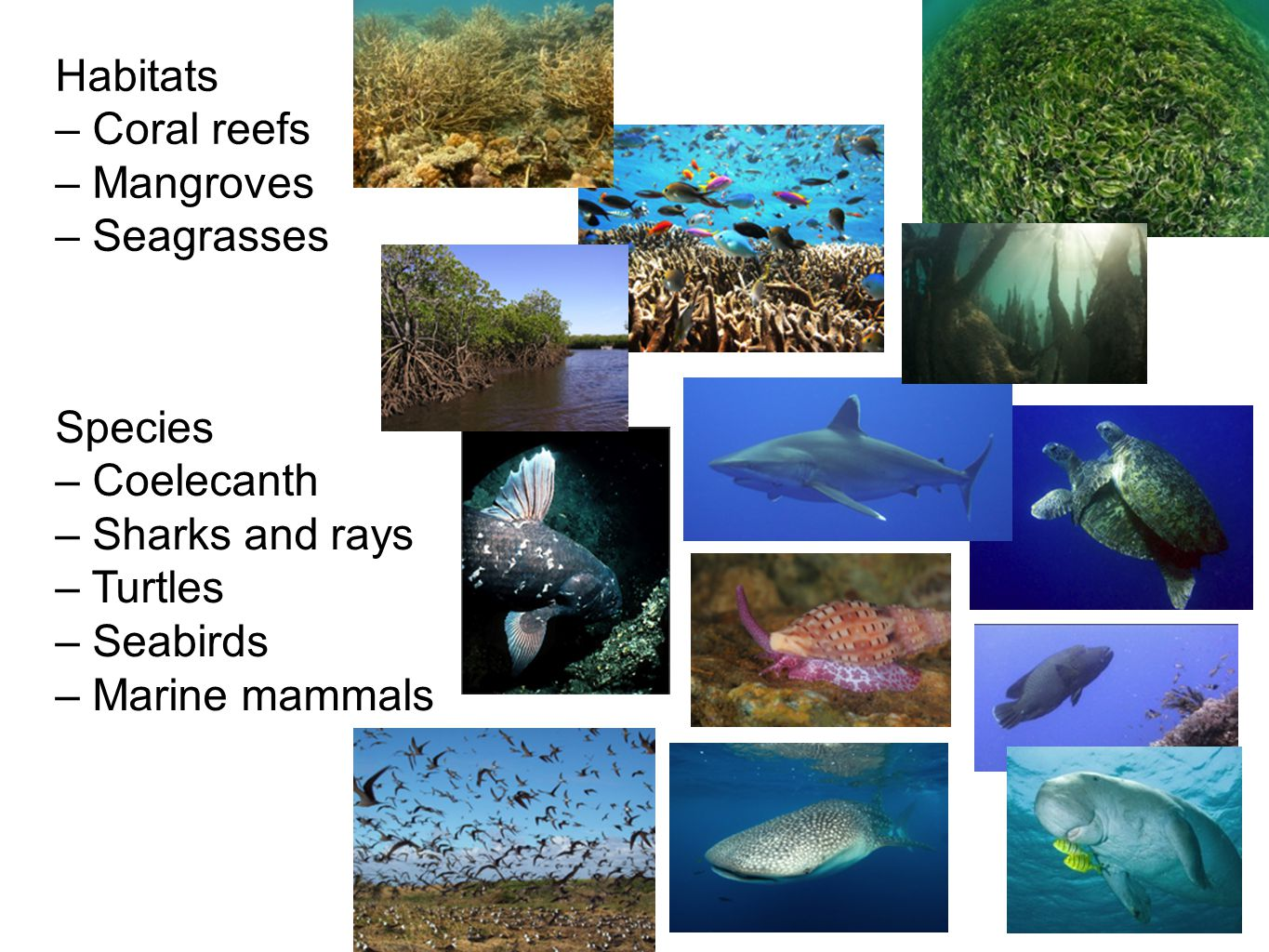 Habitats – Coral reefs – Mangroves – Seagrasses Species – Coelecanth – Sharks and rays – Turtles – Seabirds – Marine mammals