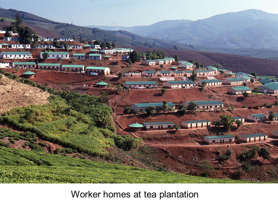 Worker homes at tea plantation