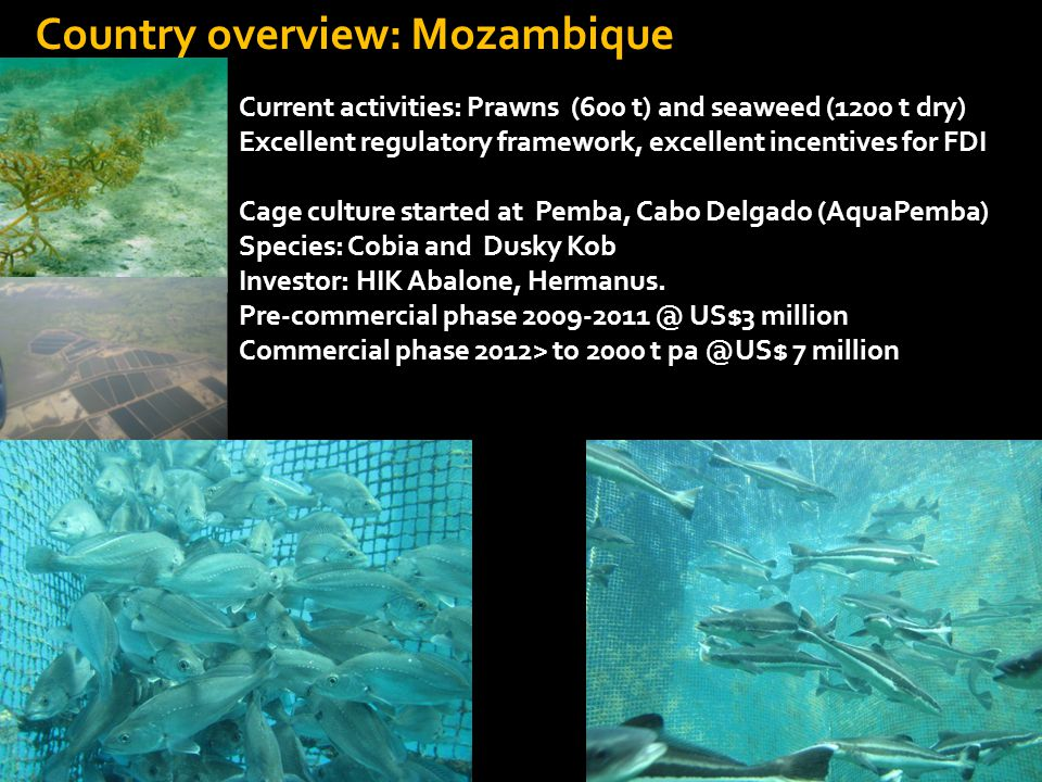 Country overview: Mozambique Current activities: Prawns (600 t) and seaweed (1200 t dry) Excellent regulatory framework, excellent incentives for FDI Cage culture started at Pemba, Cabo Delgado (AquaPemba) Species: Cobia and Dusky Kob Investor: HIK Abalone, Hermanus.