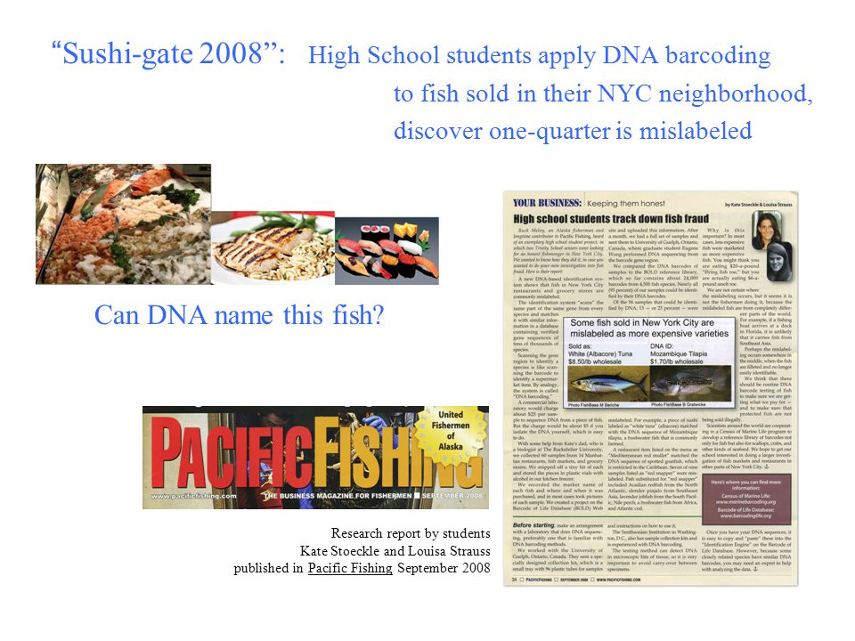 Sushi-gate 2008 : High School students apply DNA barcoding to fish sold in their NYC neighborhood, discover one-quarter is mislabeled Research report by students Kate Stoeckle and Louisa Strauss published in Pacific Fishing September 2008 Can DNA name this fish?
