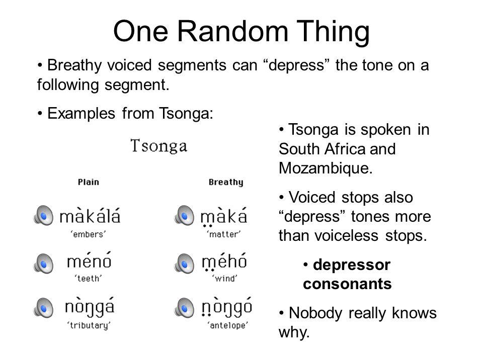 One Random Thing Breathy voiced segments can depress the tone on a following segment.