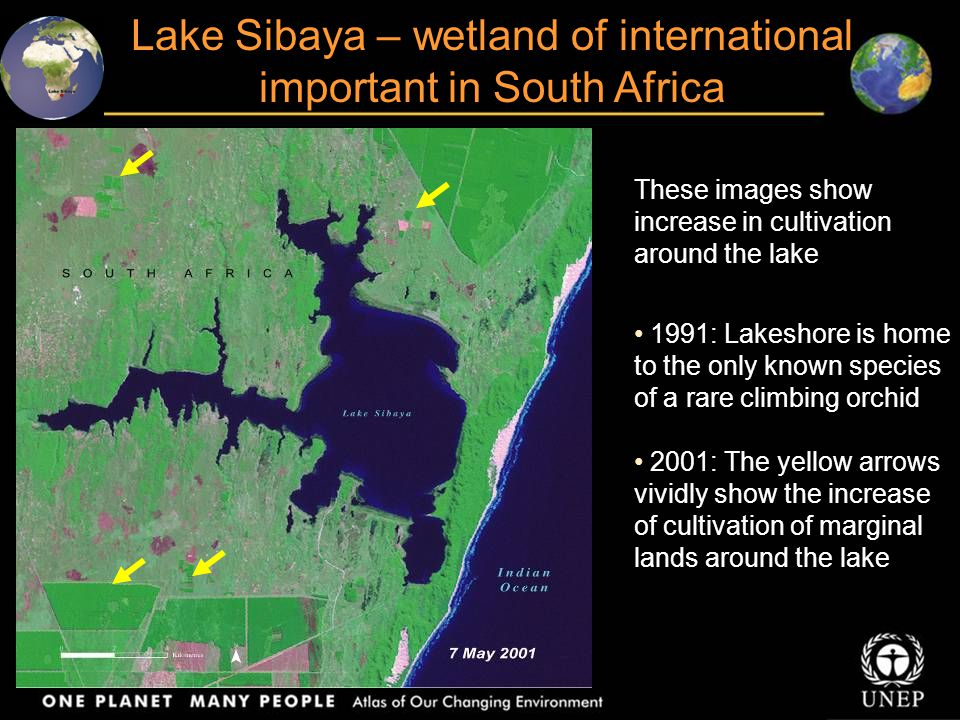Lake Sibaya – wetland of international important in South Africa These images show increase in cultivation around the lake 1991: Lakeshore is home to the only known species of a rare climbing orchid 2001: The yellow arrows vividly show the increase of cultivation of marginal lands around the lake