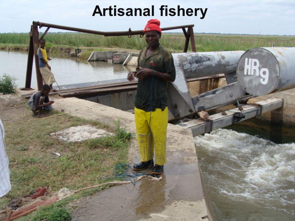 Artisanal fishery