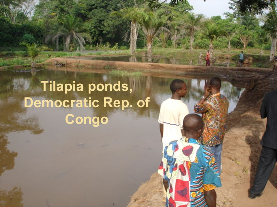 Tilapia ponds, Democratic Rep. of Congo