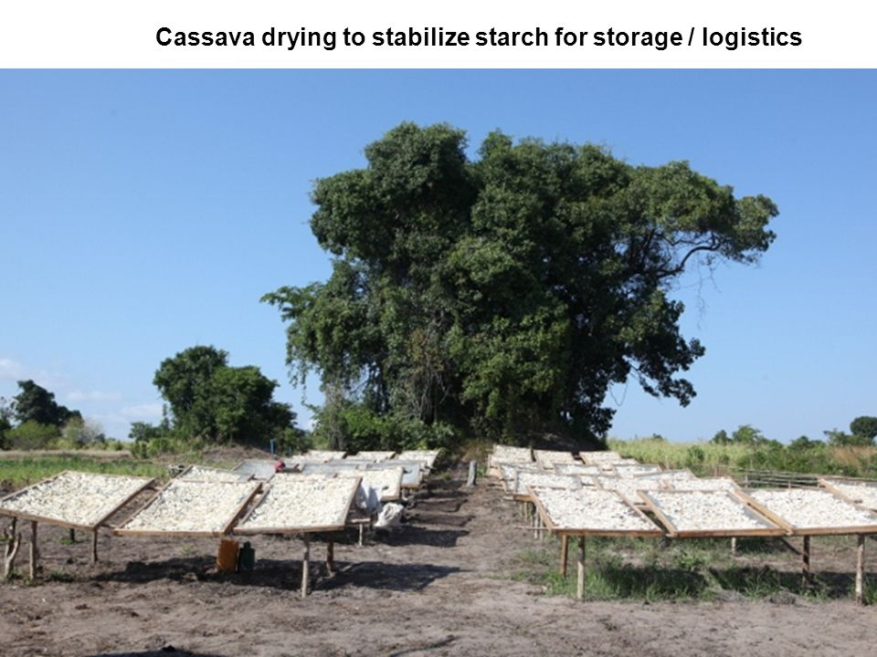 Cassava drying to stabilize starch for storage / logistics