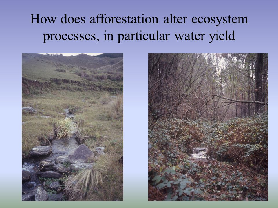 How does afforestation alter ecosystem processes, in particular water yield