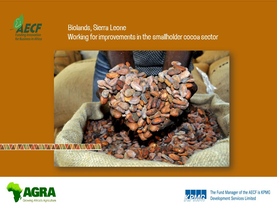 Biolands, Sierra Leone Working for improvements in the smallholder cocoa sector