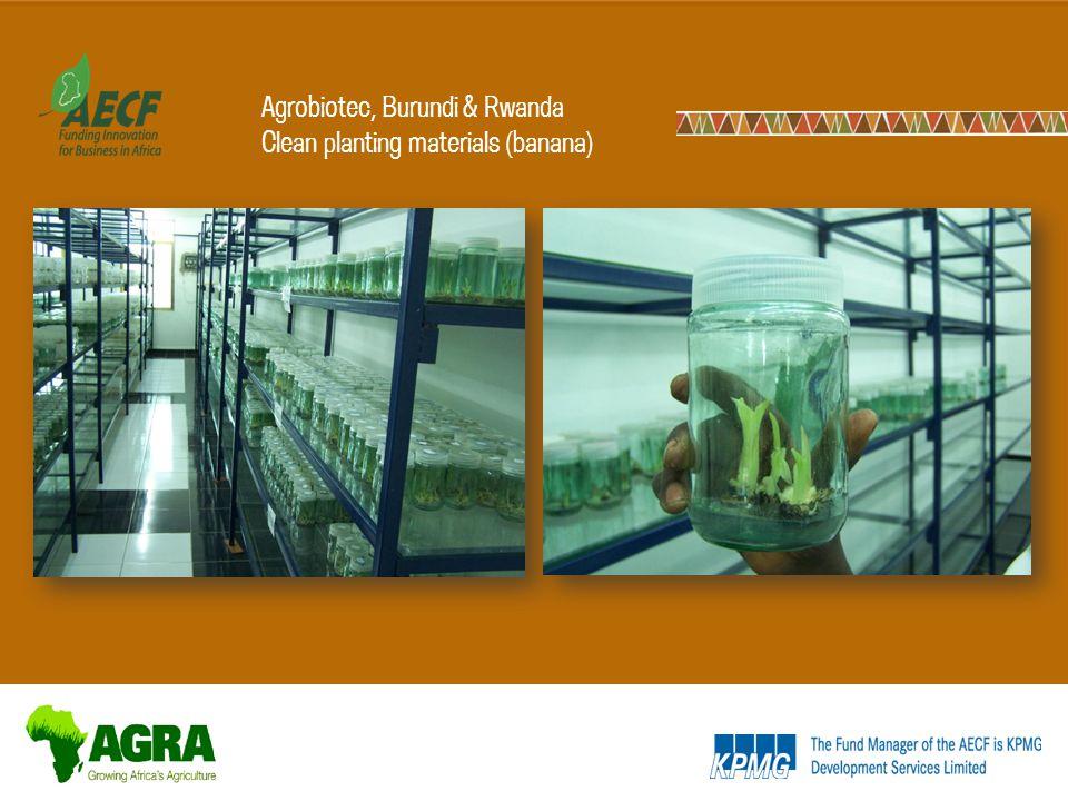 Agrobiotec, Burundi & Rwanda Clean planting materials (banana)