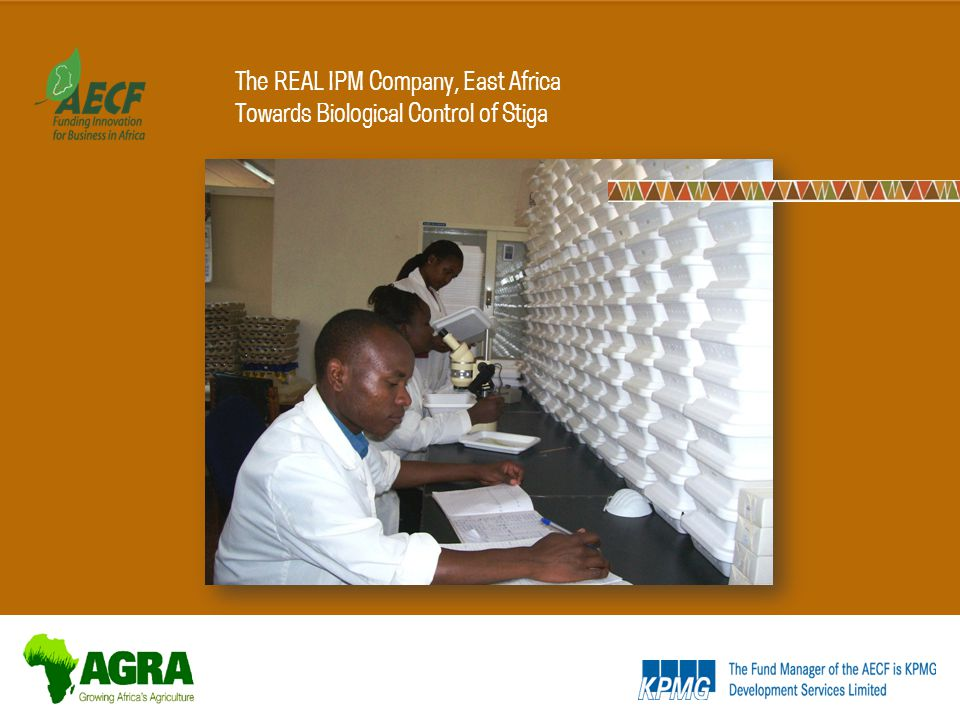 The REAL IPM Company, East Africa Towards Biological Control of Stiga